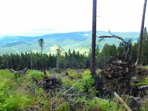 Pohled z vrcholu Špičáku